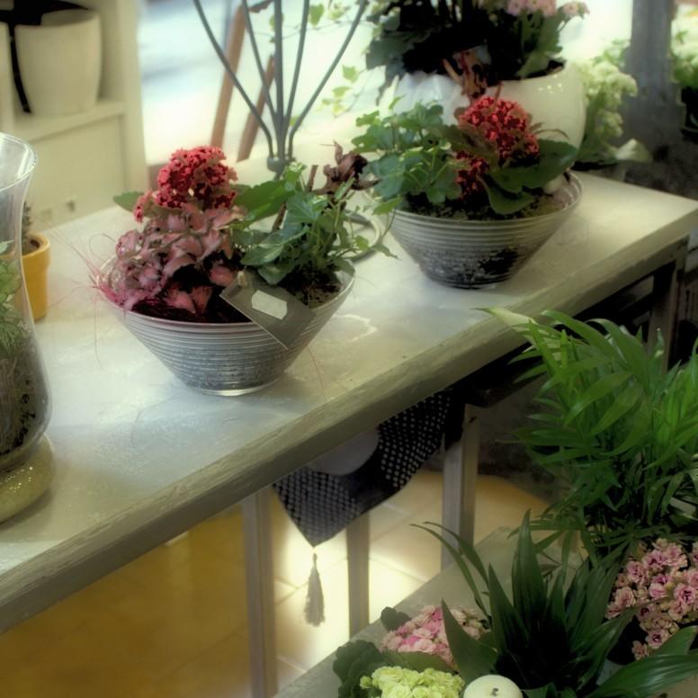 muguet floristería 2